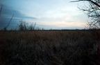 wetlands-dusk.jpg
