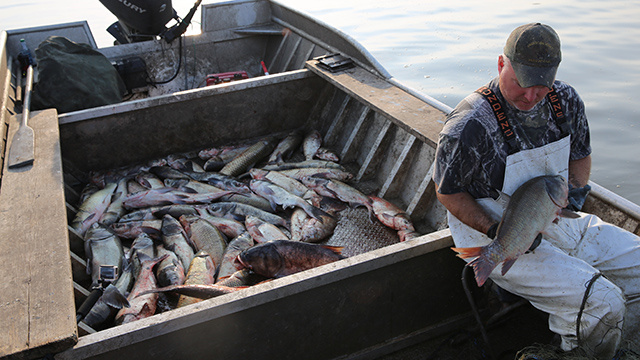 An Invasive Species of Fish Is Taking Over America's Waterways   VICE Canada