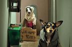 alley-dogs.jpg