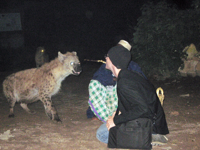 Hyenas In Ethiopia Will Eat Out Of Your Mouth Vice