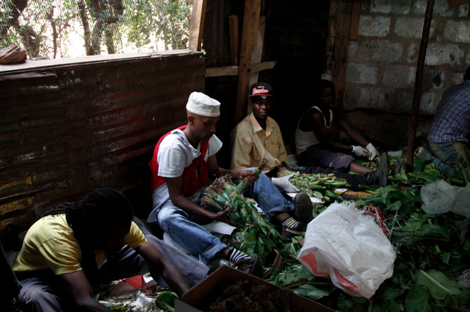 Why The Khat Ban Will Be Almost As Pointless As The Drug