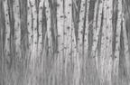 skog,v.jpg
