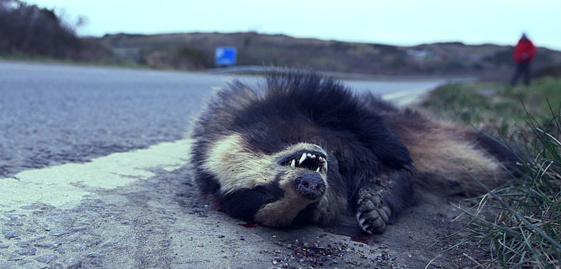 The Man Who Eats Roadkill