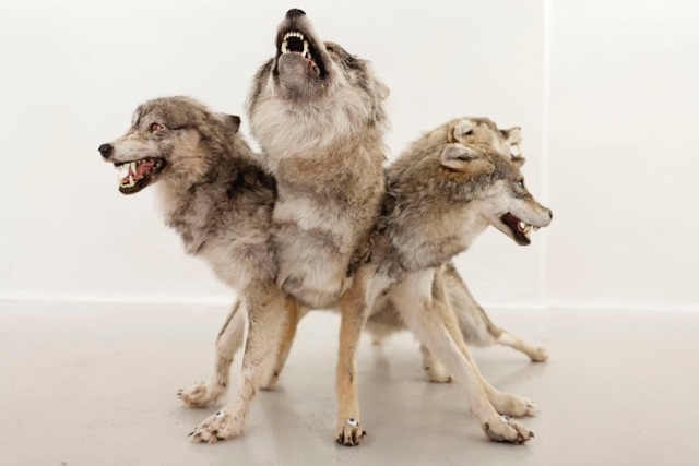 Erik Tidemann Makes Big-headed CreepazoidsThree Headed Animal Drawing