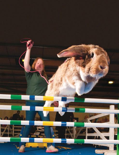 Show Jumping Bunnies Jumping Bunnies Vice